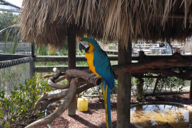 A pretty parrot guy.